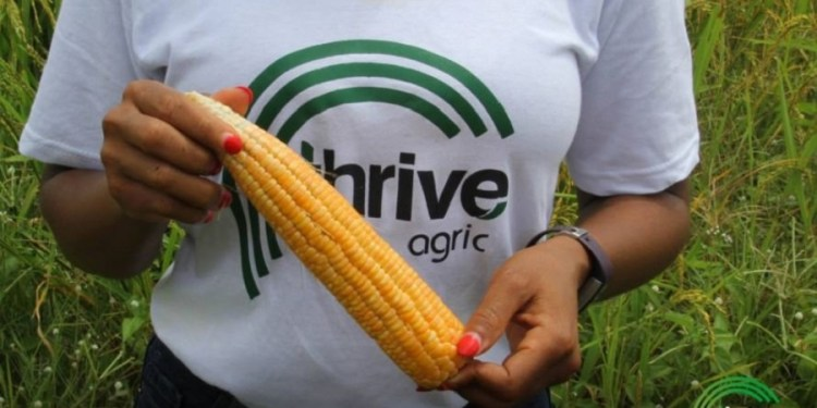 Nigerian Agric-tech startup, Thrive Agric receives $1.5 million grant to boost incomes of 50,000 farmers